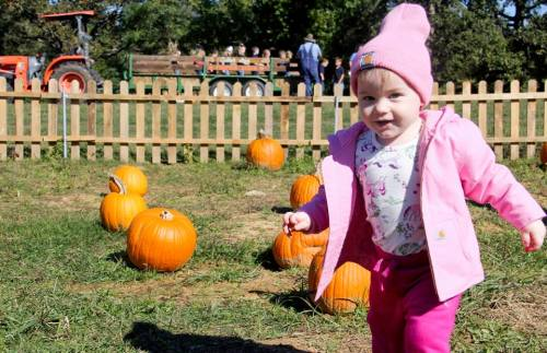 Lily in the pumpkins